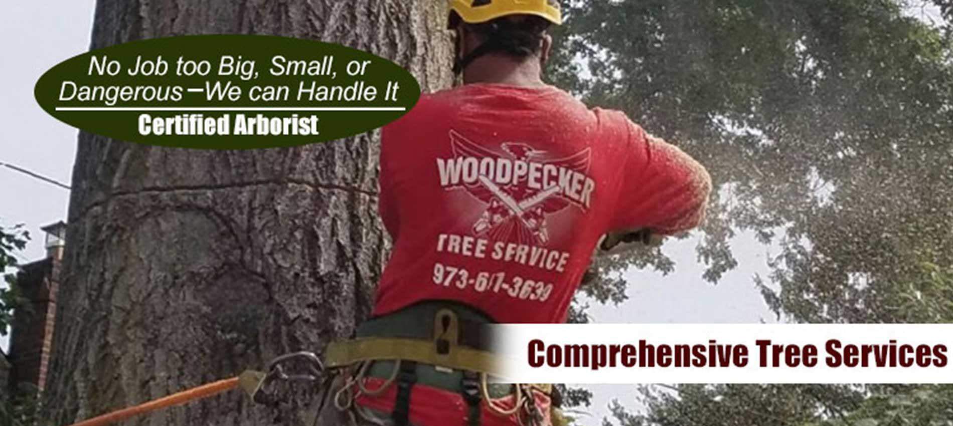Certified Arborist - Woodpecker Tree Service - No Job Too Big or Too Small. We Can Handle It!