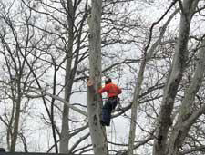 Tree Shaping in Wharton, NJ