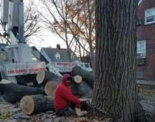 Tree Services in Wharton, NJ