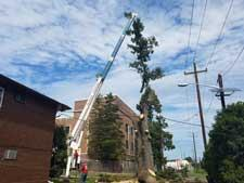Tree Topping Reduction Cut in Wharton, NJ
