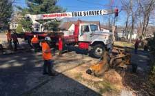 Commercial Tree Removal in Wharton, NJ