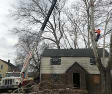 Residential Tree Removal in Wharton, NJ
